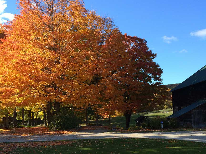 Maple Lane Farm in Autumn