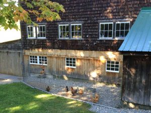 Maple Lane Farm - Chickens
